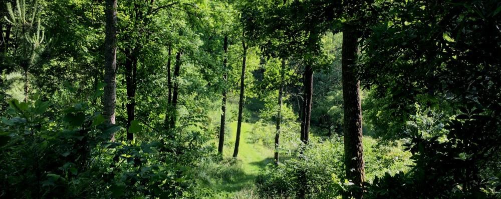 Grassy-path-crop