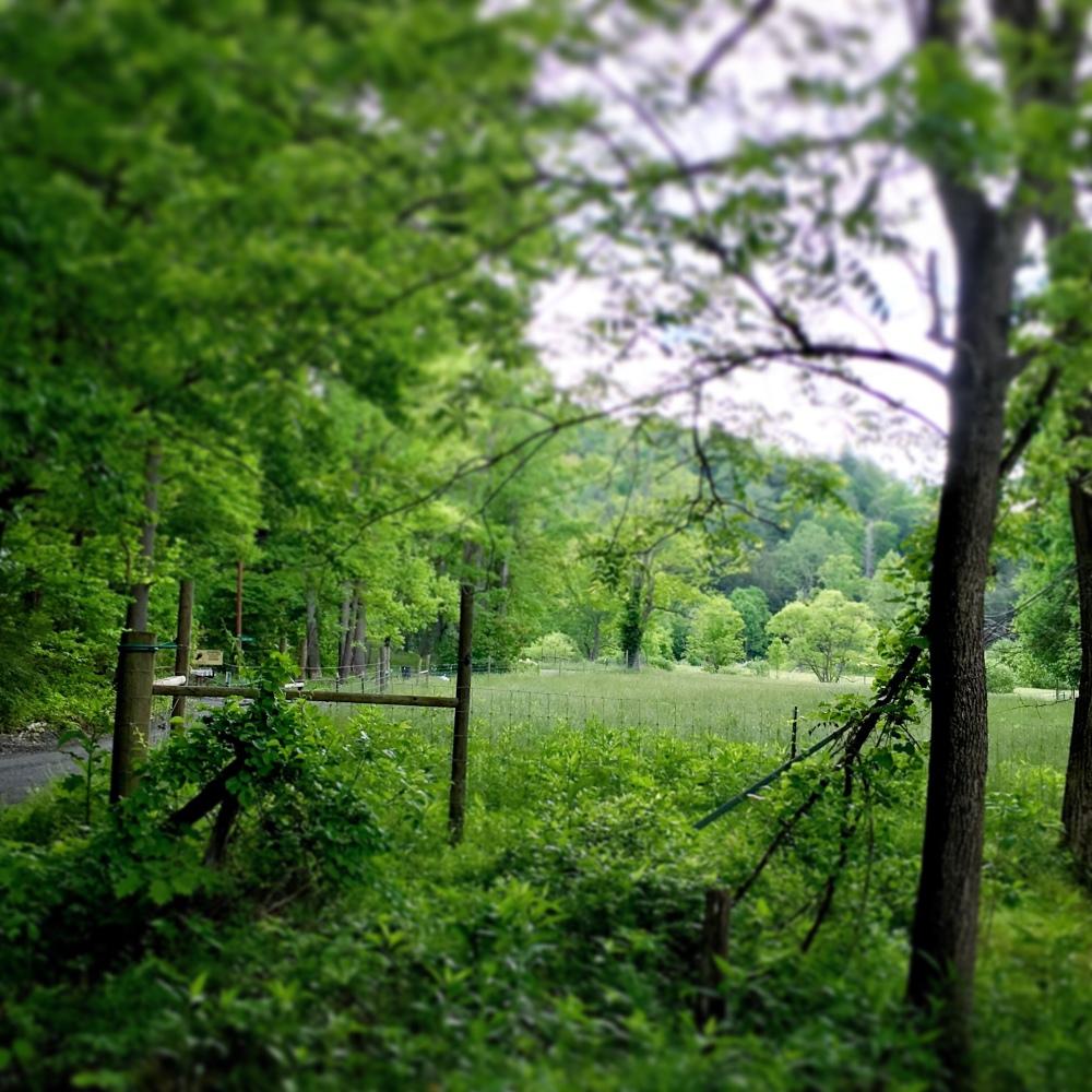 Photo of a fenced-in field surrounded by trees